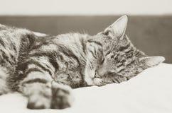 Кот Tabby лежит на кровати и спит Кот мил Стоковая Фотография RF