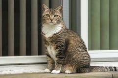 Кот Tabby на двери дома Стоковые Фото