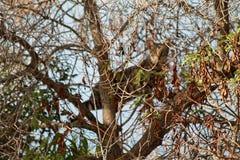 Кот Tabby на дереве стоковые изображения