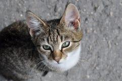 Кот Tabby на мостоваой. Стоковые Фото