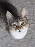 Кот Tabby на мостоваой. Стоковая Фотография