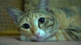 Кот Tabby подготавливает спать с шумом телевидения видеоматериал