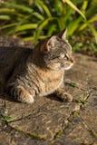 Кот Tabby принимая sunbath Стоковая Фотография
