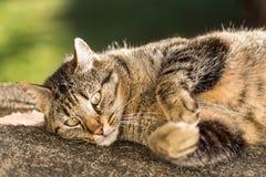 Кот Tabby свертывая на том основании Стоковые Фотографии RF