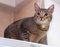 Кот Tabby сидя на холодильнике Стоковые Изображения RF