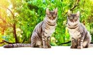 Кот Tabby 2 сидит на белой поверхности на предпосылке зеленого l Стоковое Фото