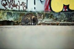 Кот Tabby сидя на граффити стоковые фотографии rf