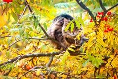 Кот Tabby сидя на дереве Стоковая Фотография