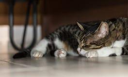 Кот Tabby спать на поле около двери Стоковые Изображения RF