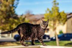 Кот Tabby Стоковая Фотография RF