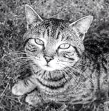 Кот tabby Стоковые Изображения RF
