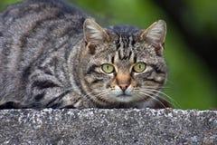 кот tom Стоковые Фотографии RF