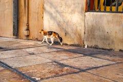 Кот vagabond на улице стоковые изображения