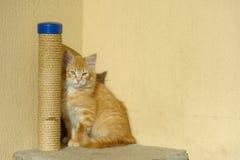 Кот Ywllow стоковые изображения rf