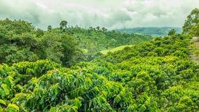 Кофейная плантация в Jerico, Колумбии Стоковые Фотографии RF