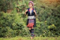 Кофейная плантация племени холма, женщина Akha выбирая красный кофе на букете на дереве стоковое фото rf