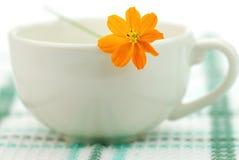 кофейная чашка Стоковые Фото