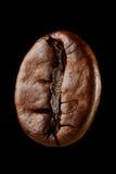Кофейное зерно макроса Стоковые Изображения RF