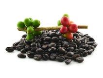 Кофейное зерно с белой предпосылкой Стоковые Фото