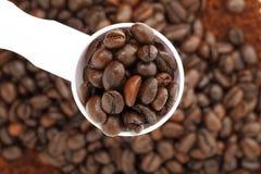 кофейное зерно Стоковые Изображения RF