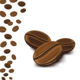 Кофейные зерна в белой предпосылке стоковые фотографии rf