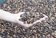 Кофейные зерна в руке Стоковые Фото