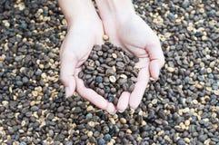 Кофейные зерна в руке Стоковая Фотография