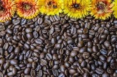 Кофейные зерна и цветок Стоковая Фотография RF