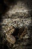 Кофейные зерна на деревянной предпосылке Стоковое Изображение RF