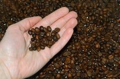 Кофейные зерна на руке на предпосылке фасолей coffe Стоковые Изображения