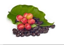 Кофейные зерна с листьями. стоковое фото