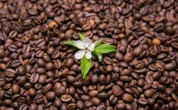 Кофейные зерна с цветком и зелеными лист стоковые изображения rf