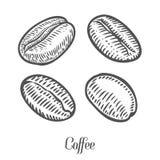 Кофейные зерна, ягода, плодоовощ, семя Естественный органический кофеин Зеленый кофе, luwak иллюстрация штока