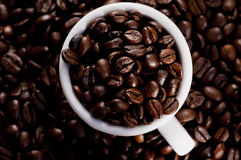 Кофейные зерна Стоковое Фото