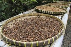 Кофейные зерна Luwak суша в корзине стоковые изображения