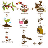 Кофе обрабатывая шаг за шагом от фасоли к любовнику кофе Стоковое Фото