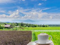 кофе с зелеными неочищенными рисами, glutinous рисом, черным липким рисом, точкой зрения на горе, провинцией Loei, горой Таиланда стоковое изображение rf