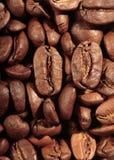 кофе фасолей зажарил в духовке Стоковые Изображения