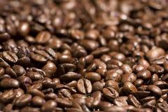 кофе фасолей Стоковое Изображение RF