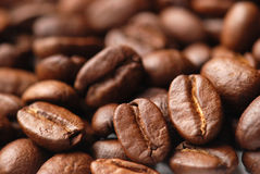 кофе фасоли Стоковые Изображения RF