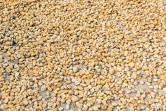 кофе фасолей сырцовый Стоковое Изображение RF