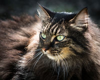Кошачий в солнечности Стоковое Изображение
