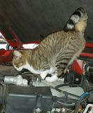 Кошачий контролер двигателя Стоковые Фотографии RF