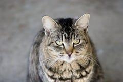 кошачий портрет Стоковые Фотографии RF