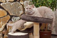 Кошки Отец и сынок игры котенка задвижки кота что-то Стоковое Фото