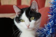 Кошки по мере того как предпосылка может используемая тема иллюстрации рождества Стоковые Изображения
