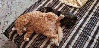Кошки стоковая фотография