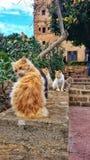 Кошки стоковое фото