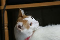 Кошки Стоковое Изображение