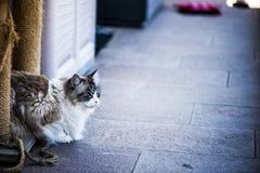 Кошки Стоковые Фото